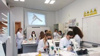 Práctica de laboratorio: microscopios